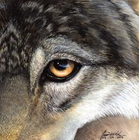 Cautious Approach by Yote