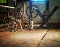 Farm cat by micahgoulart