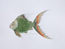 Fish illustration by Cocoloy