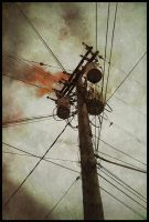 iPhoneography,  Dove on the Downside II by Gerald-Bostock