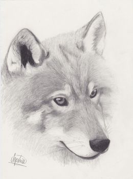 Wolf by Sioha