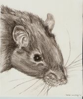 Watje - Drawing of a rat by Aswulf