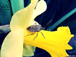 Signs of Spring. by JDM4CHRIST