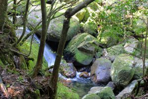 Shiratani Forest in Yakushima by xgenuine