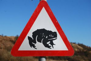 Beware Frogs on the Road by mr-macd