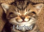 Cat: I farted by Zoniathedragoness