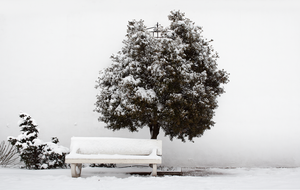 Banco y Arbol con Nieve by SuperStar-Stock