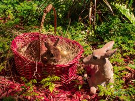 Easter Basket 1 by WatchTower513