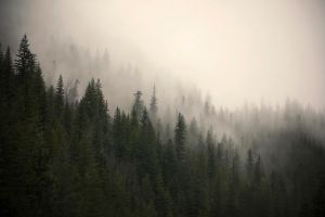 misty mountain weather 17 by JasonKaiser