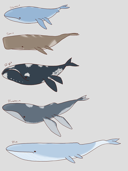 Wailord Variations by backinthefarm