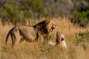 Pilanesberg Passion by LinRuPhotography