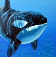Killer Whale- my favorite by Jc2theW