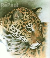 JAGUAR by Repaul