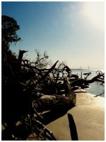 Driftwood Beach6 by sees2moons