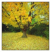 Fall lonely tree. img508, with story by harrietsfriend