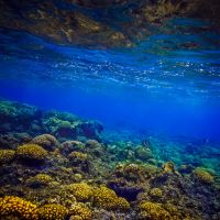 corals by fly10