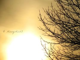 Closer to the Sun (2) by Michies-Photographyy