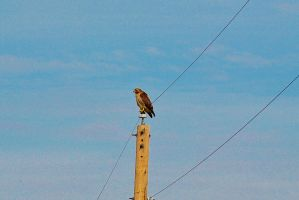 Bird on a Wire by sweetz76