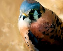American Kestrel by studio-emi