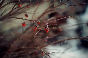 Little Red Dots by Theanimalparade