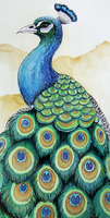 Peacock by Zaphy1415926