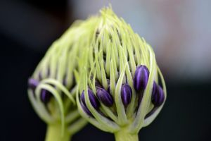 unidentified flowering object by Unclespikey