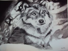 Just a wolf by Pietas