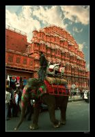 Elephant at Hawa Mahal - Color by BaciuC
