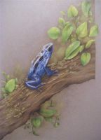 Dendrobates Azureus by BluestOfBirds