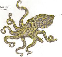 blue ringed octopus by Schytelizard94