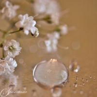 Babys Breath by AllysaH-Photography