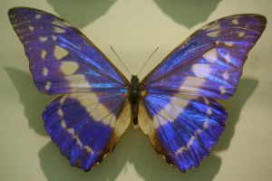 Butterfly Stock 29 (private use) by Malleni-Stock