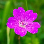 After the rain by starykocur