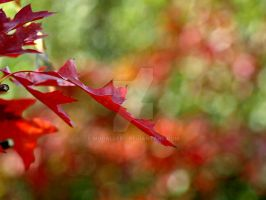 Autumn leave by MDGallery