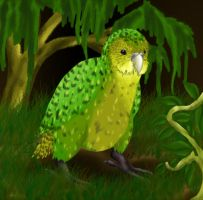 -Kakapo- by Ms-Silver
