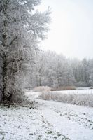winterland 55 by priesteres-stock