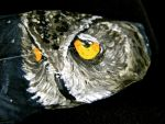 owl close up by your-friendly-nukes