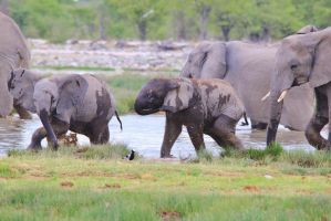 Elephant Games - Playful Youth and Beautiful Life by LivingWild