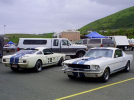 Shelby GT350 road and track by Partywave