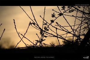 nature under the sunset by archonGX