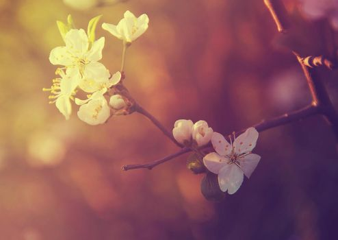 Spring flowers by OlgaCherkasova