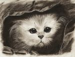 Cat in a Bag by TheGreatMillz33