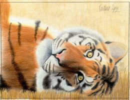 Panthera Tigris by annarti