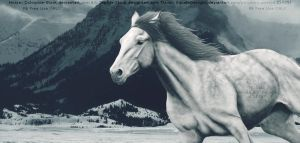 Ponybox Horse Picture by EquideDesigns