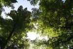 Green Trees by FreeakStock