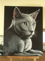 Majesty of a Russian Blue. by AriaDog