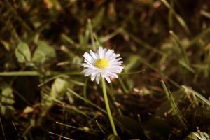 freak of daisy by annbuht