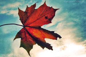 autumn leaf by medinka