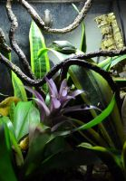 American tree frogs terrarium by E-Dowely
