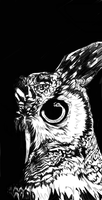 Owl by ExistTRACE